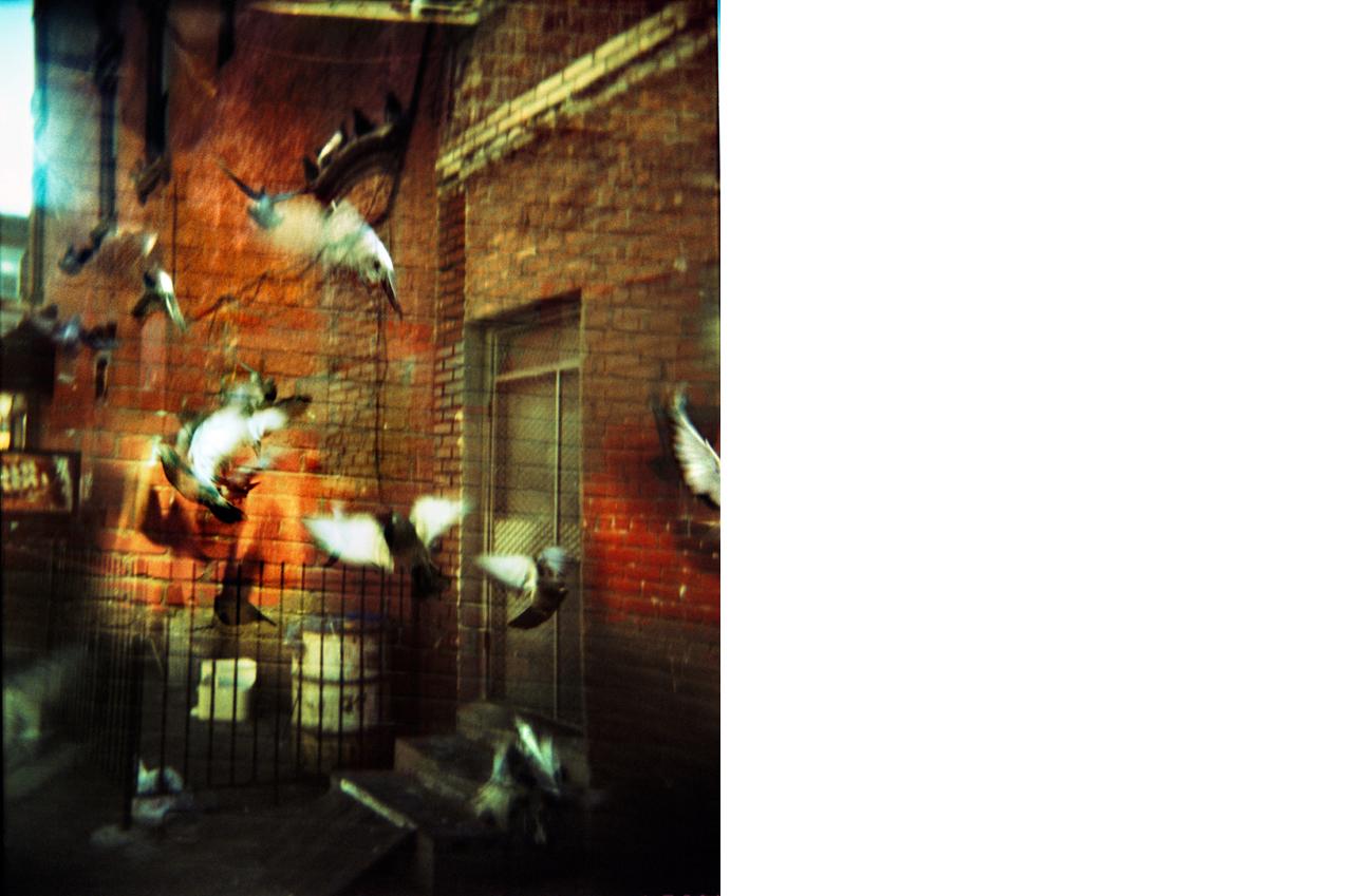 Pigeons / Part 1